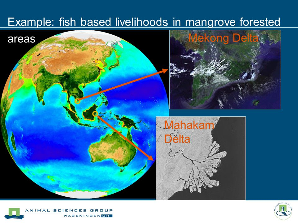 Mahakam Delta Mekong Delta Example: fish based livelihoods in mangrove forested areas