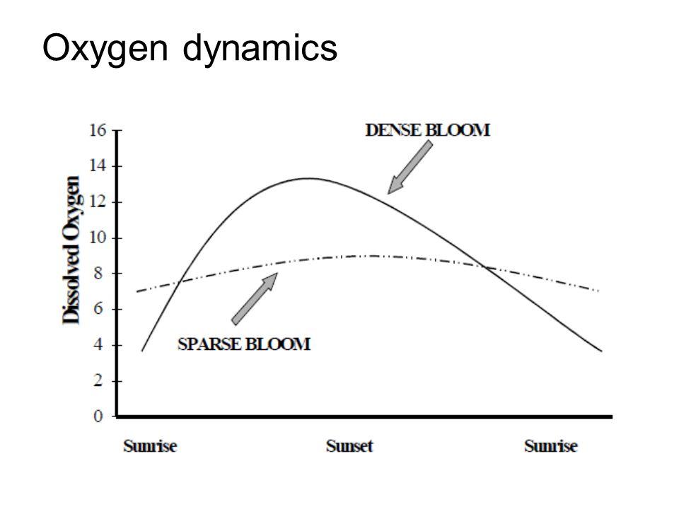 Oxygen dynamics