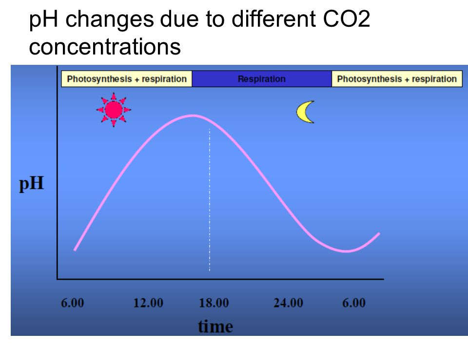 pH changes due to different CO2 concentrations