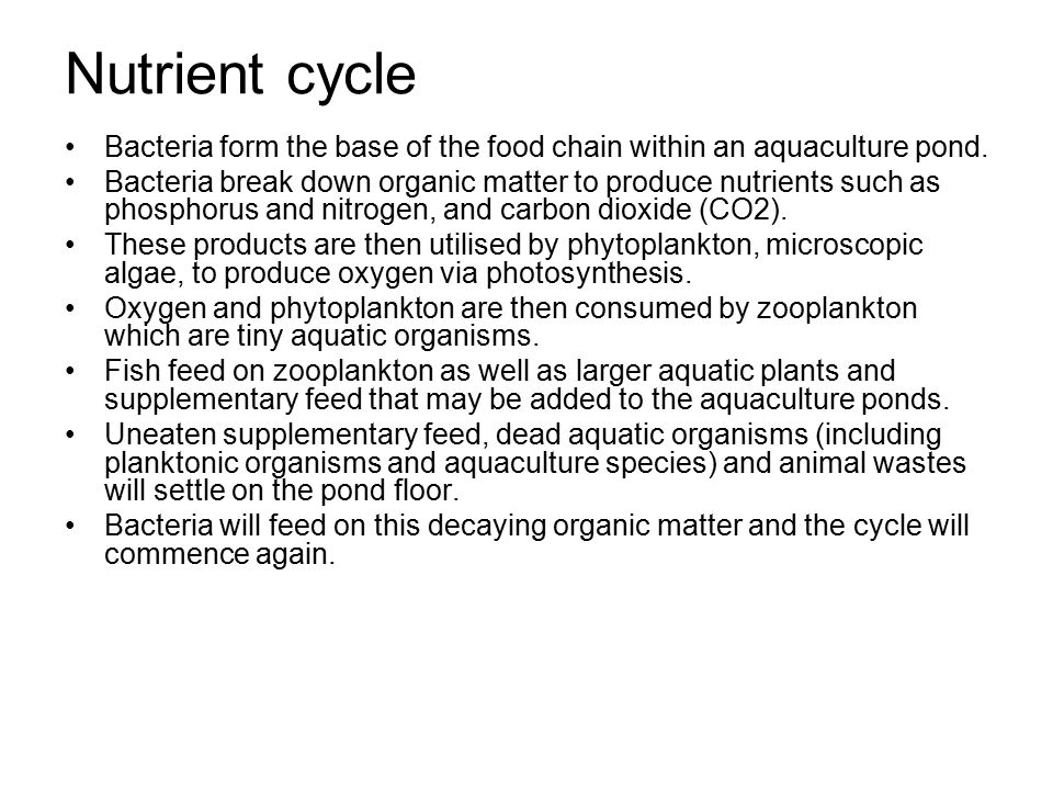 Nutrient cycle Bacteria form the base of the food chain within an aquaculture pond.
