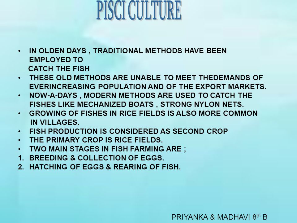 PRIYANKA & MADHAVI 8 th B IN OLDEN DAYS, TRADITIONAL METHODS HAVE BEEN EMPLOYED TO CATCH THE FISH THESE OLD METHODS ARE UNABLE TO MEET THEDEMANDS OF EVERINCREASING POPULATION AND OF THE EXPORT MARKETS.