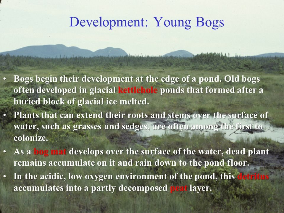 Bog Types In southern New England, bogs include those with northern and those with southern geographical affinities.
