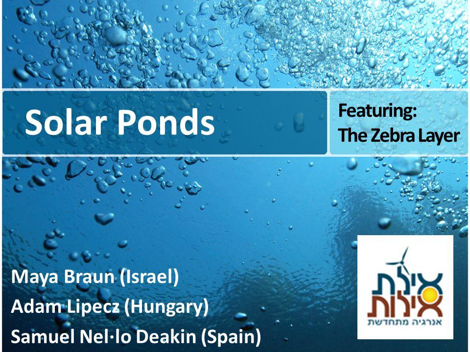 Solar Ponds Maya Braun (Israel) Adam Lipecz (Hungary) Samuel Nel·lo Deakin (Spain) Featuring: The Zebra Layer