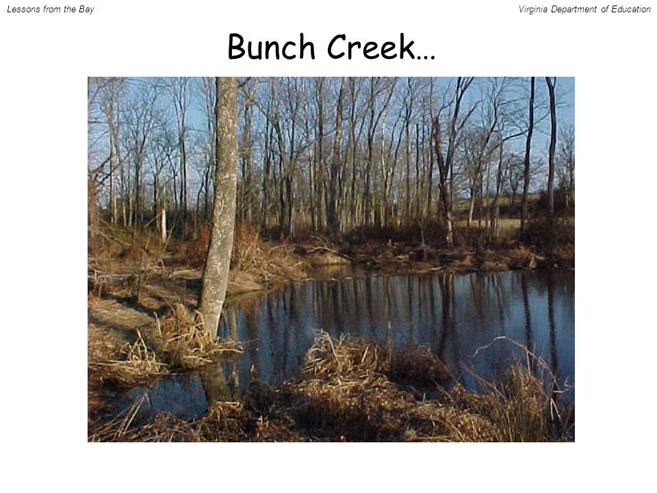 Bunch Creek… Lessons from the BayVirginia Department of Education