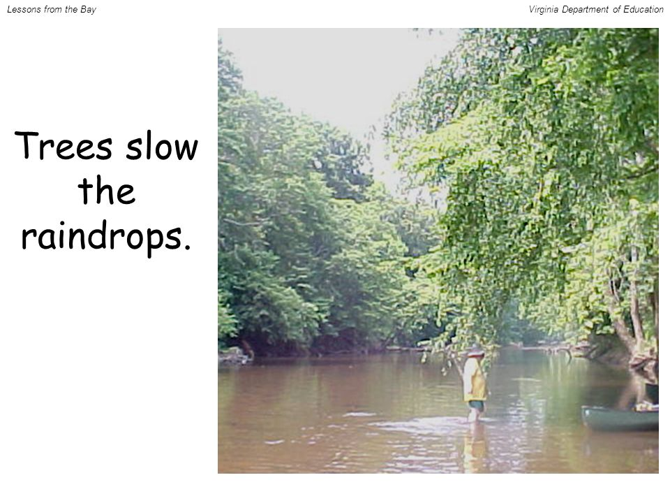Trees slow the raindrops. Lessons from the BayVirginia Department of Education