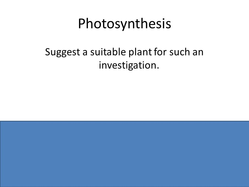 Photosynthesis Suggest a suitable plant for such an investigation. Aquatic plant or named, e.g. Elodea