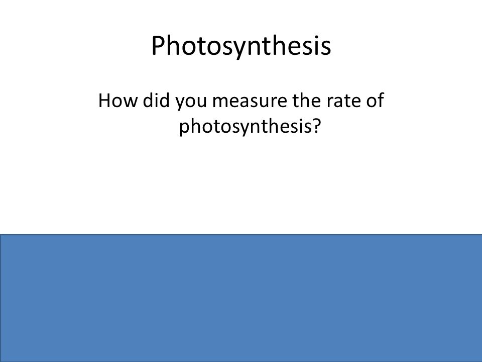 Photosynthesis How did you measure the rate of photosynthesis? Counted number of bubbles / per unit time