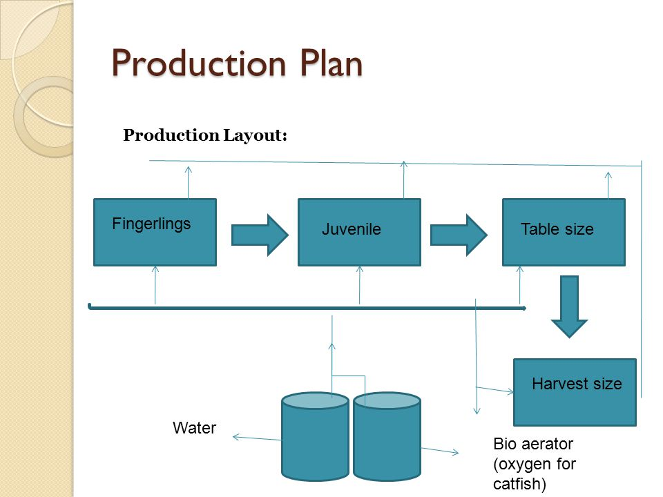 Production Plan Production Layout: Fingerlings JuvenileTable size Harvest size Water Bio aerator (oxygen for catfish)