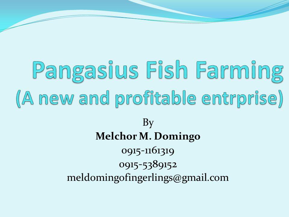By Melchor M. Domingo 0915-1161319 0915-5389152 meldomingofingerlings@gmail.com