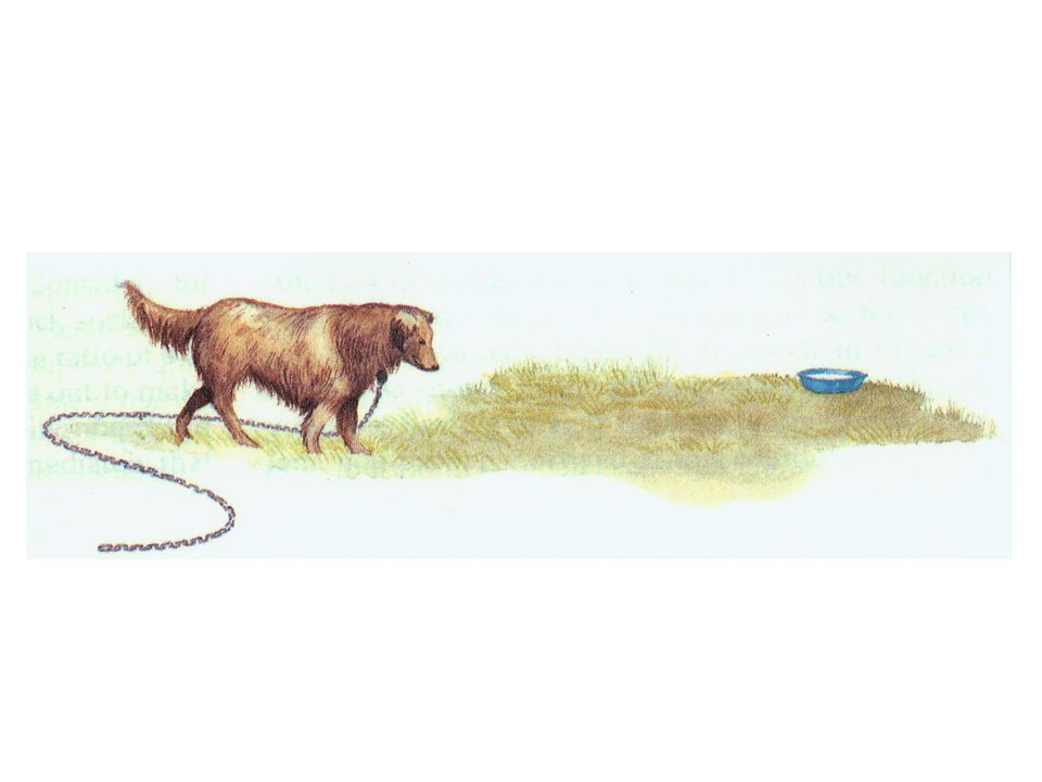 A dog has a 6 foot chain fastened around his neck and his water bowl is 10 feet away.