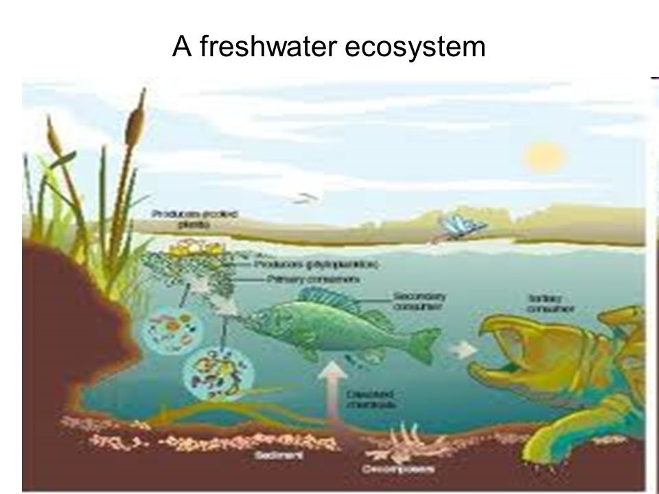 1 A freshwater ecosystem