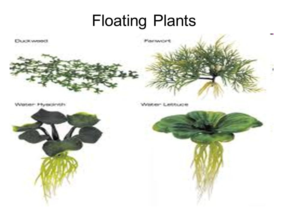 18 Floating Plants