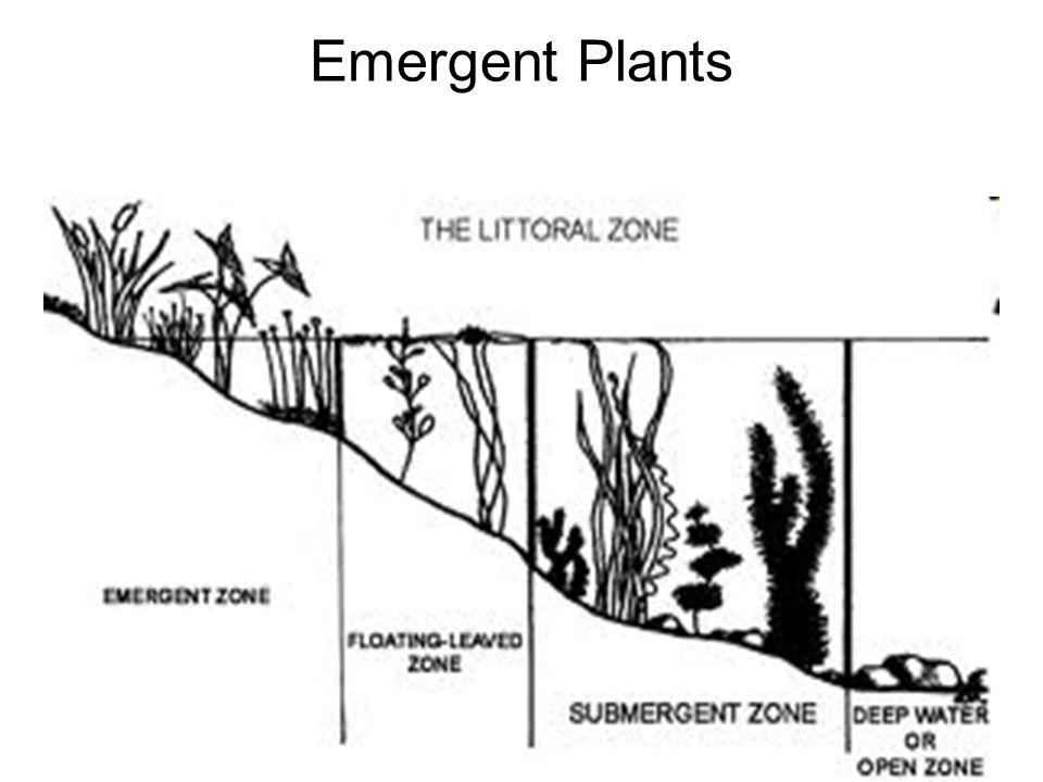 20 Emergent Plants