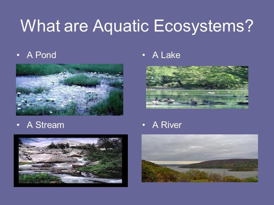 What are Aquatic Ecosystems A PondA Lake A StreamA River