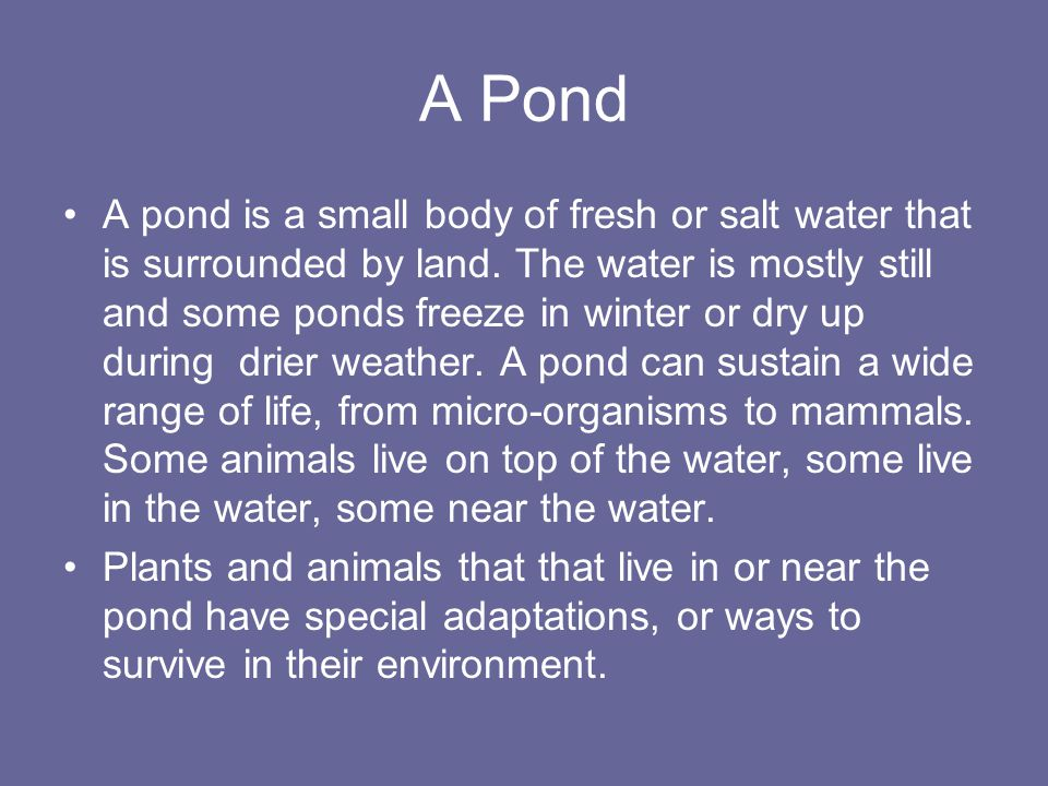 A Pond A pond is a small body of fresh or salt water that is surrounded by land.