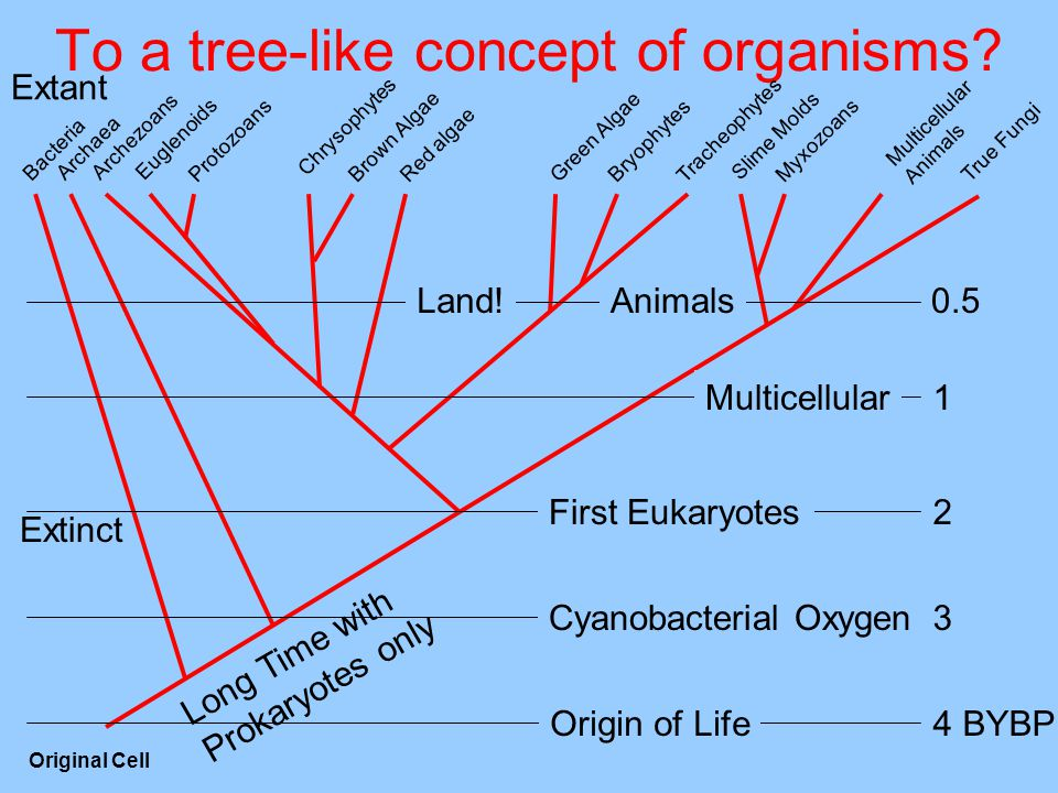 To a tree-like concept of organisms.