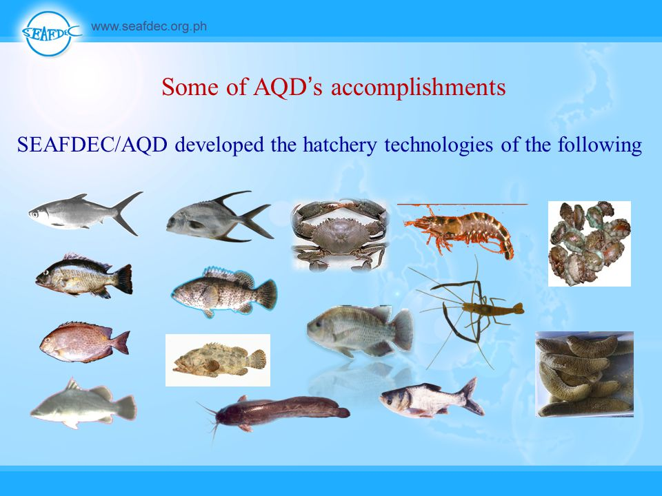 Some of AQD's accomplishments SEAFDEC/AQD developed the hatchery technologies of the following