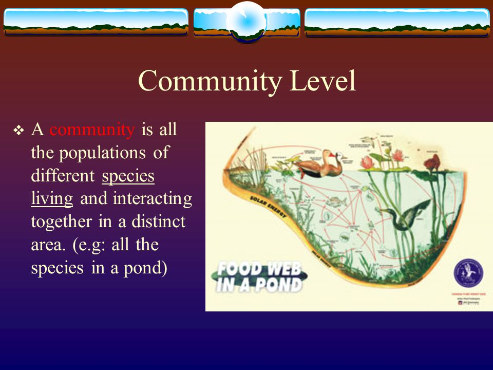Community Level  A community is all the populations of different species living and interacting together in a distinct area. (e.g: all the species in