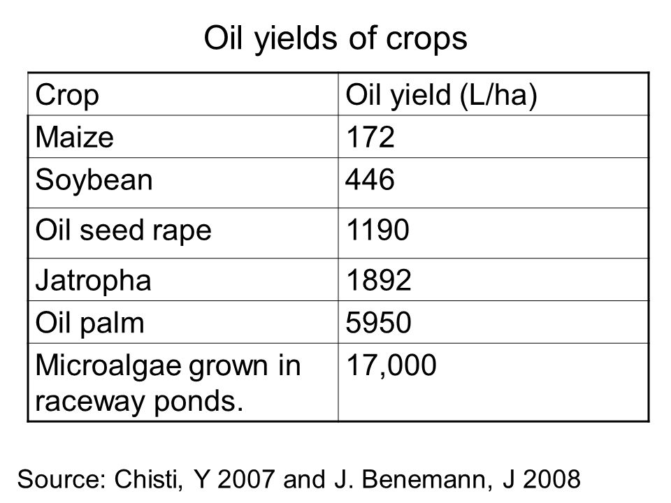 Oil yields of crops CropOil yield (L/ha) Maize172 Soybean446 Oil seed rape1190 Jatropha1892 Oil palm5950 Microalgae grown in raceway ponds.