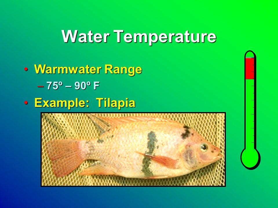 Water Temperature Warmwater RangeWarmwater Range –75º – 90º F Example: TilapiaExample: Tilapia