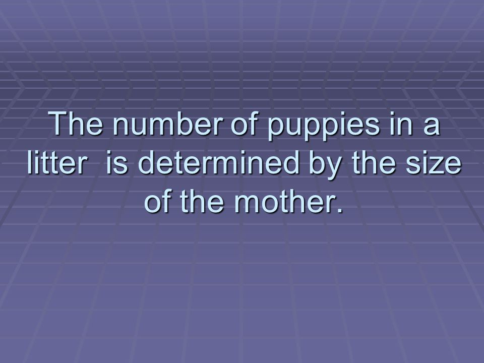 The number of puppies in a litter is determined by the size of the mother.