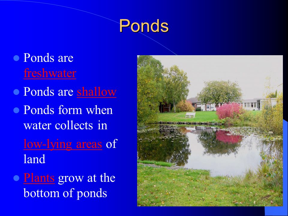 Ponds Ponds are freshwater Ponds are shallow Ponds form when water collects in low-lying areas of land Plants grow at the bottom of ponds