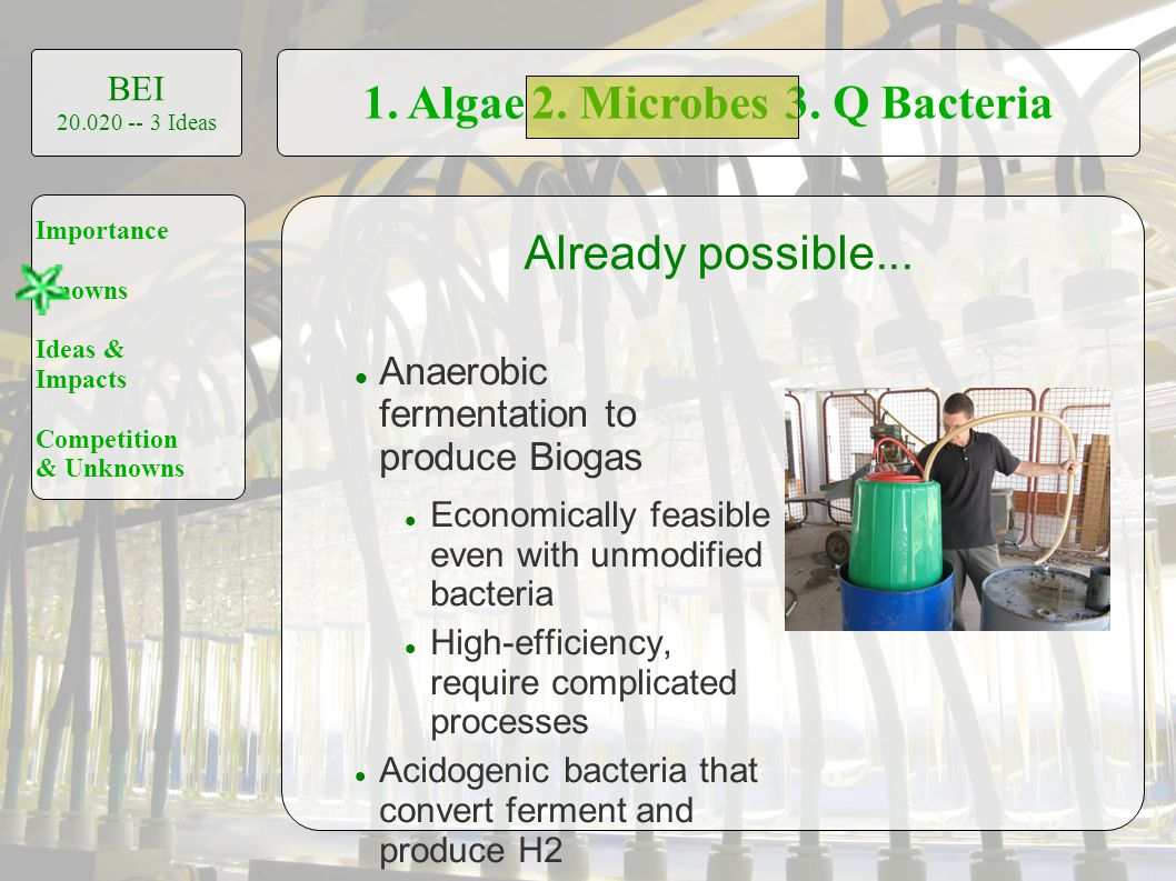 1. Algae2. Microbes3. Q Bacteria BEI 20.020 -- 3 Ideas Importance Knowns Ideas & Impacts Competition & Unknowns Already possible... Anaerobic fermenta