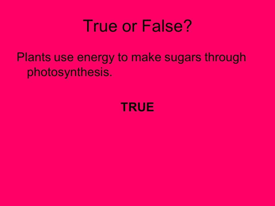 True or False? Plants use energy to make sugars through photosynthesis. TRUE