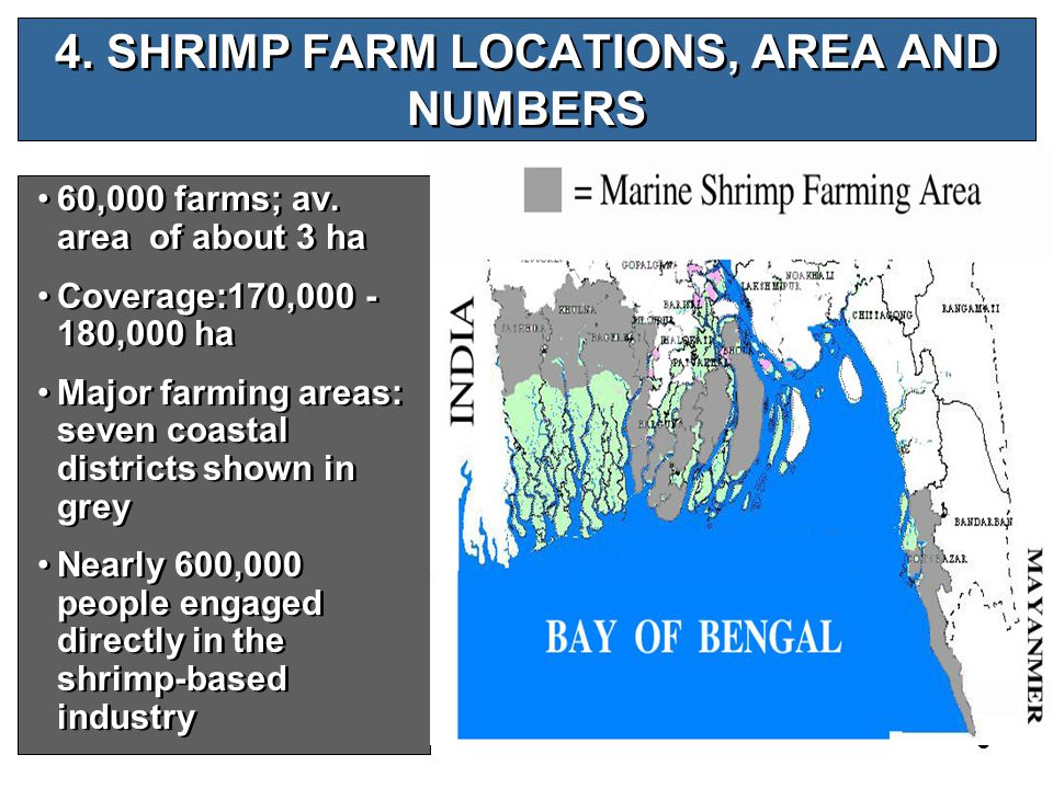 5 4. SHRIMP FARM LOCATIONS, AREA AND NUMBERS 60,000 farms; av.