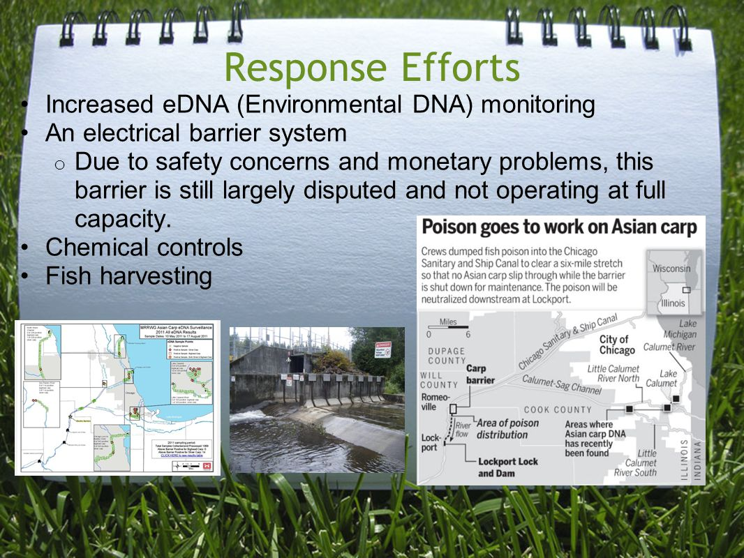 Response Efforts Increased eDNA (Environmental DNA) monitoring An electrical barrier system o Due to safety concerns and monetary problems, this barrier is still largely disputed and not operating at full capacity.