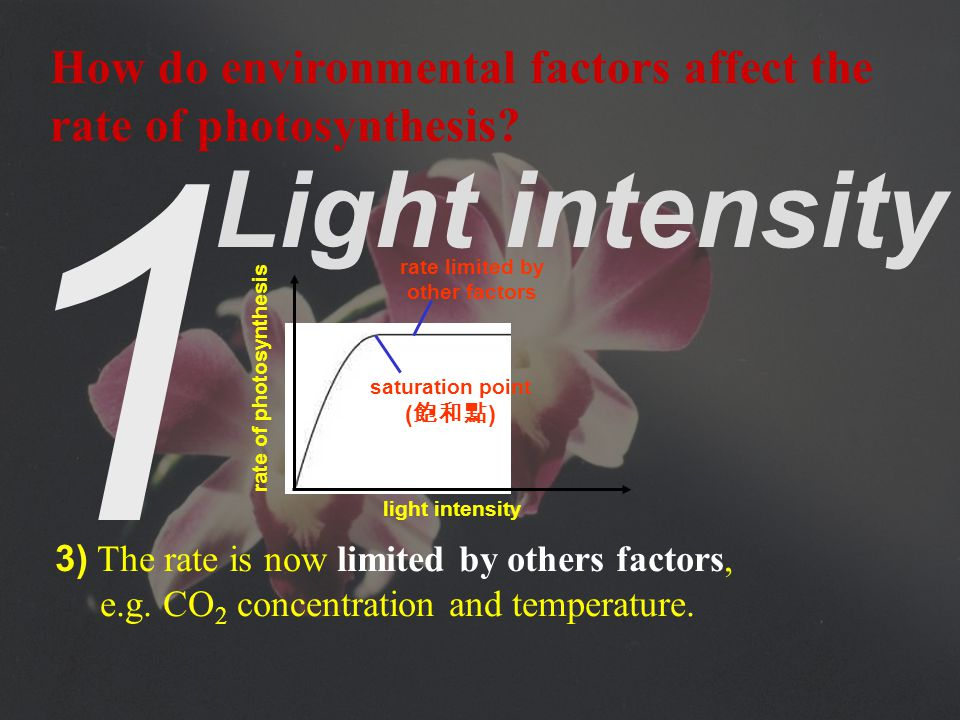 1 Light intensity 2) The increase stops when the light intensity reaches a saturation point.