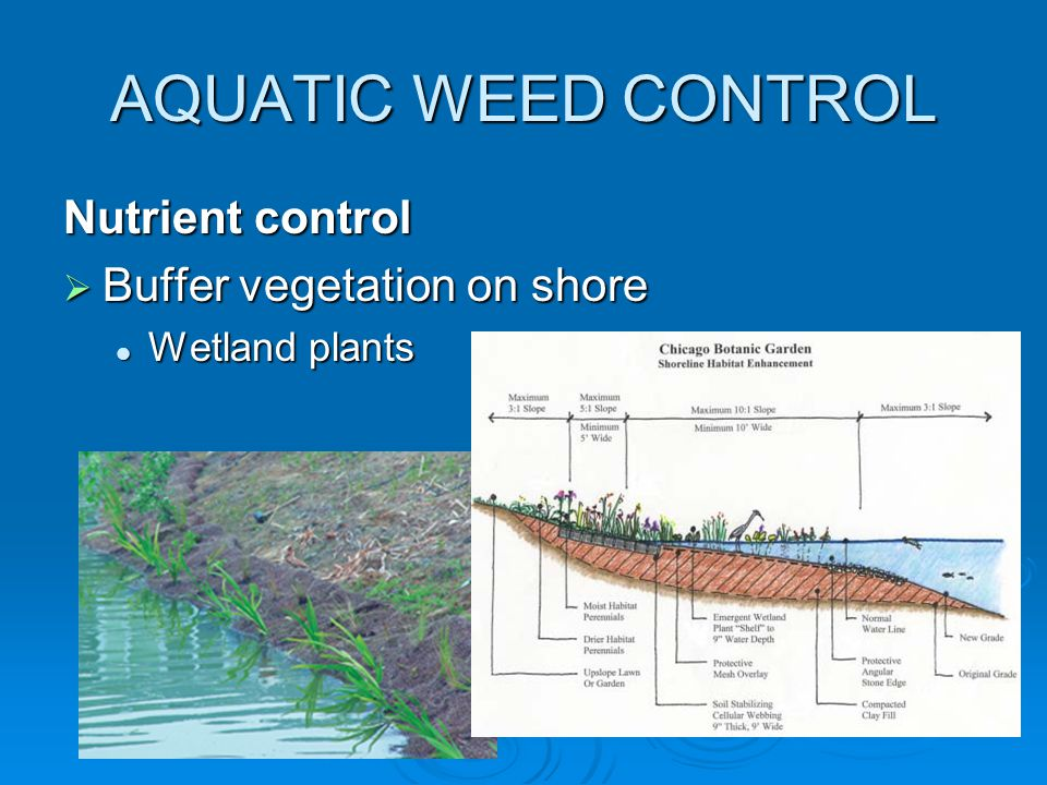 Nutrient control  Buffer vegetation on shore Wetland plants Wetland plants