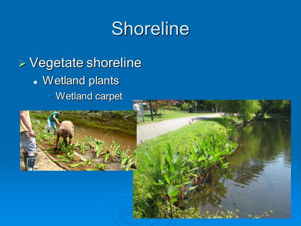 Shoreline  Vegetate shoreline Wetland plants Wetland plants Wetland carpetWetland carpet