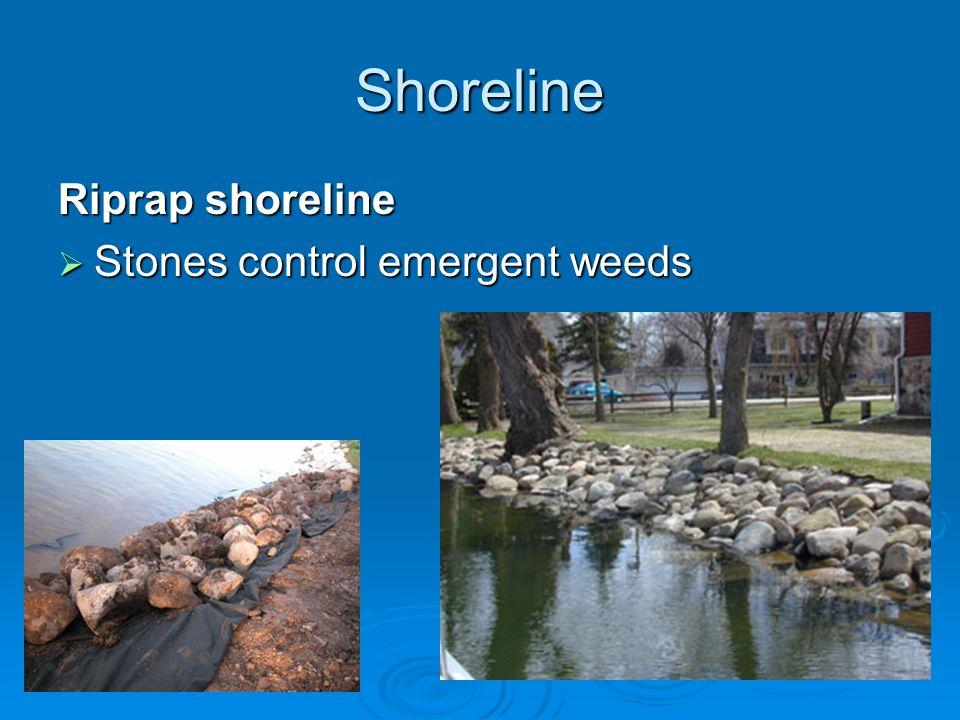 Shoreline Riprap shoreline  Stones control emergent weeds