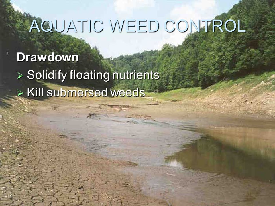 AQUATIC WEED CONTROL Drawdown  Solidify floating nutrients  Kill submersed weeds