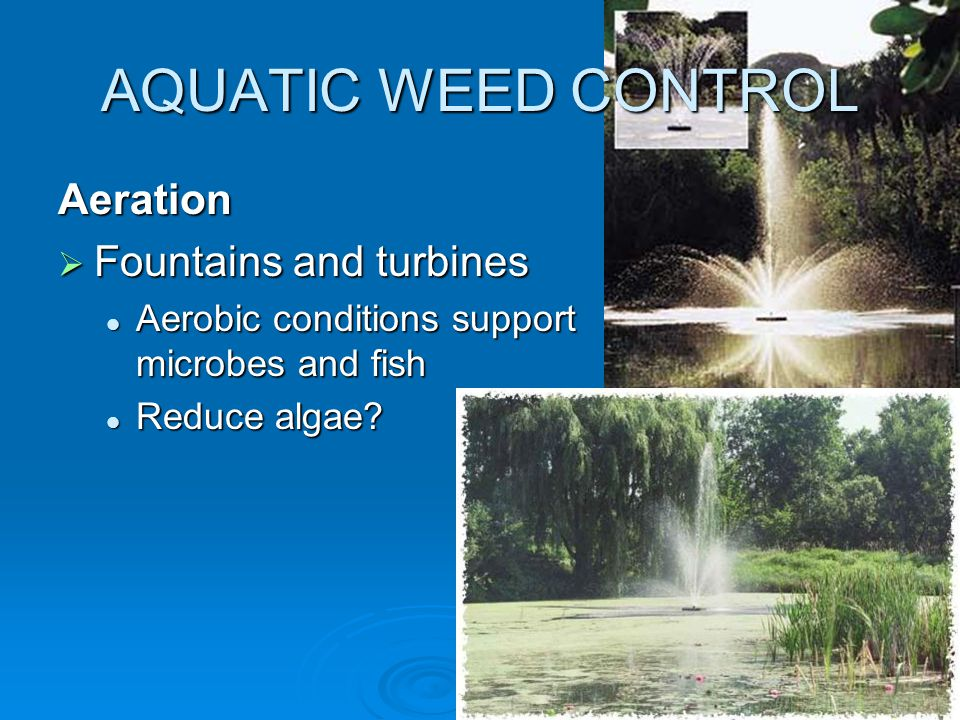AQUATIC WEED CONTROL Aeration  Fountains and turbines Aerobic conditions support microbes and fish Aerobic conditions support microbes and fish Reduce algae.
