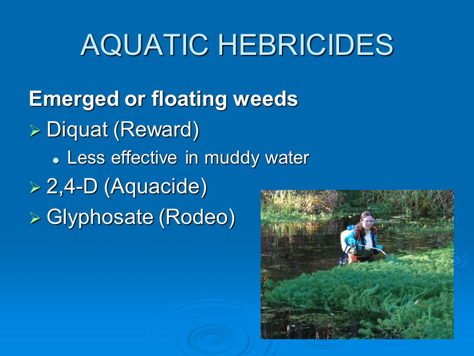 AQUATIC HEBRICIDES Emerged or floating weeds  Diquat (Reward) Less effective in muddy water Less effective in muddy water  2,4-D (Aquacide)  Glyphosate (Rodeo)