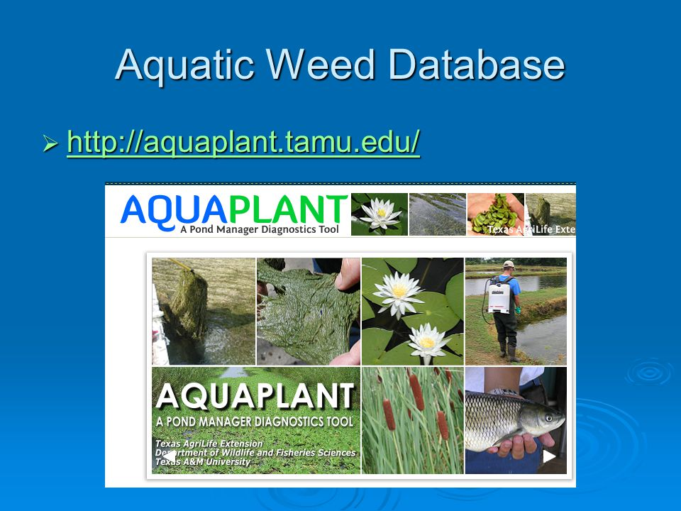 Aquatic Weed Database  http://aquaplant.tamu.edu/ http://aquaplant.tamu.edu/