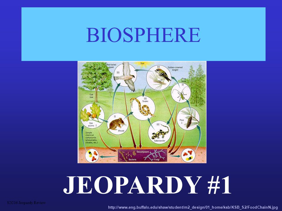 ECOLOGY 400 niche An organism's _____________ includes not only where it lives, but what it eats, what eats it, how it reproduces, and how it interacts with its habitat S2C06 Jeopardy Review