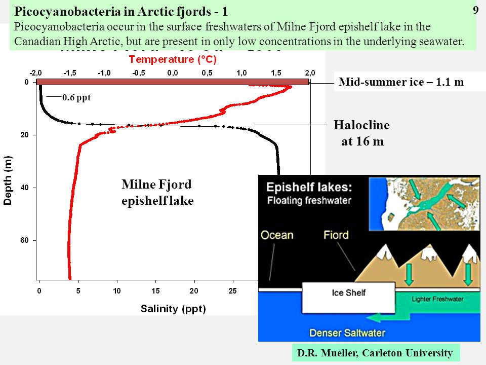 0.6 ppt Halocline at 16 m Epishelf lakes and fjords Milne Fjord epishelf lake Mid-summer ice – 1.1 m D.R.