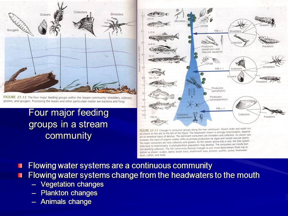 Four major feeding groups in a stream community Flowing water systems are a continuous community Flowing water systems change from the headwaters to t