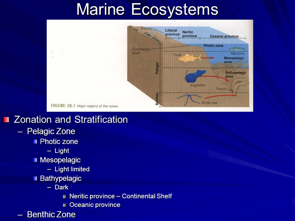 Marine Ecosystems Zonation and Stratification –Pelagic Zone Photic zone –Light Mesopelagic –Light limited Bathypelagic –Dark Neritic province – Contin