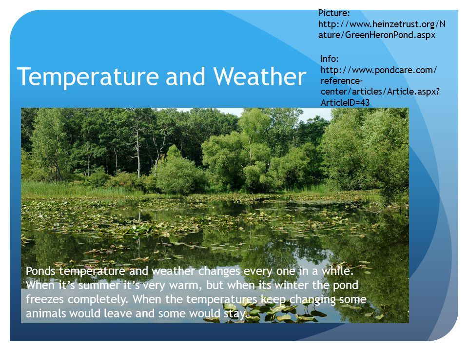 Temperature and Weather Picture: http://www.heinzetrust.org/N ature/GreenHeronPond.aspx Ponds temperature and weather changes every one in a while.