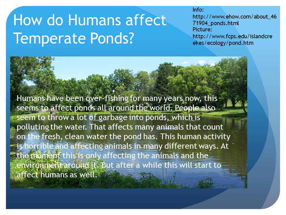 How do Humans affect Temperate Ponds.