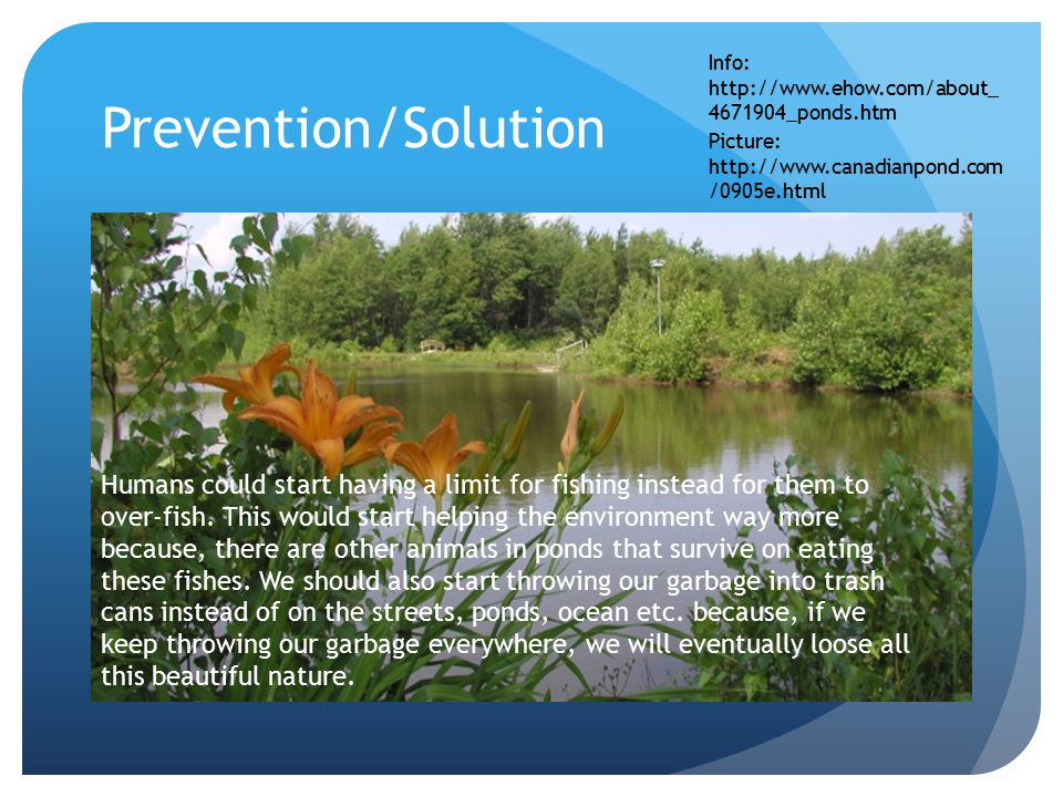 Prevention/Solution Humans could start having a limit for fishing instead for them to over-fish.