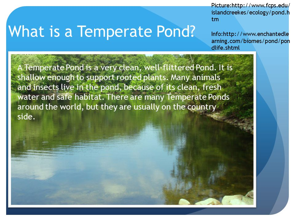 What is a Temperate Pond? A Temperate Pond is a very clean, well-flittered Pond. It is shallow enough to support rooted plants. Many animals and insec