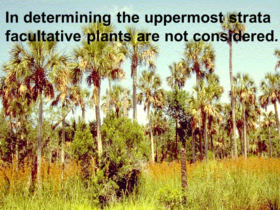 In determining the uppermost strata facultative plants are not considered.
