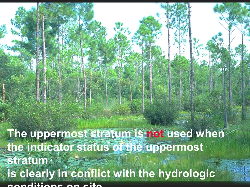 The uppermost stratum is not used when the indicator status of the uppermost stratum is clearly in conflict with the hydrologic conditions on site.
