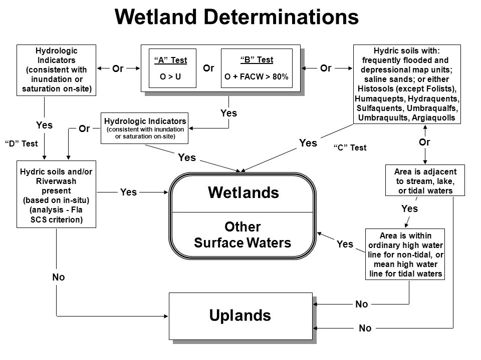Wetland Determinations Hydric soils with: frequently flooded and depressional map units; saline sands; or either Histosols (except Folists), Humaquept