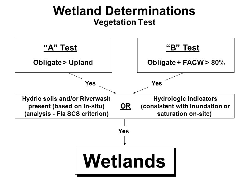 "Wetland Determinations Vegetation Test ""A"" Test Obligate > Upland ""B"" Test Obligate + FACW > 80% Hydric soils and/or Riverwash present (based on in-si"